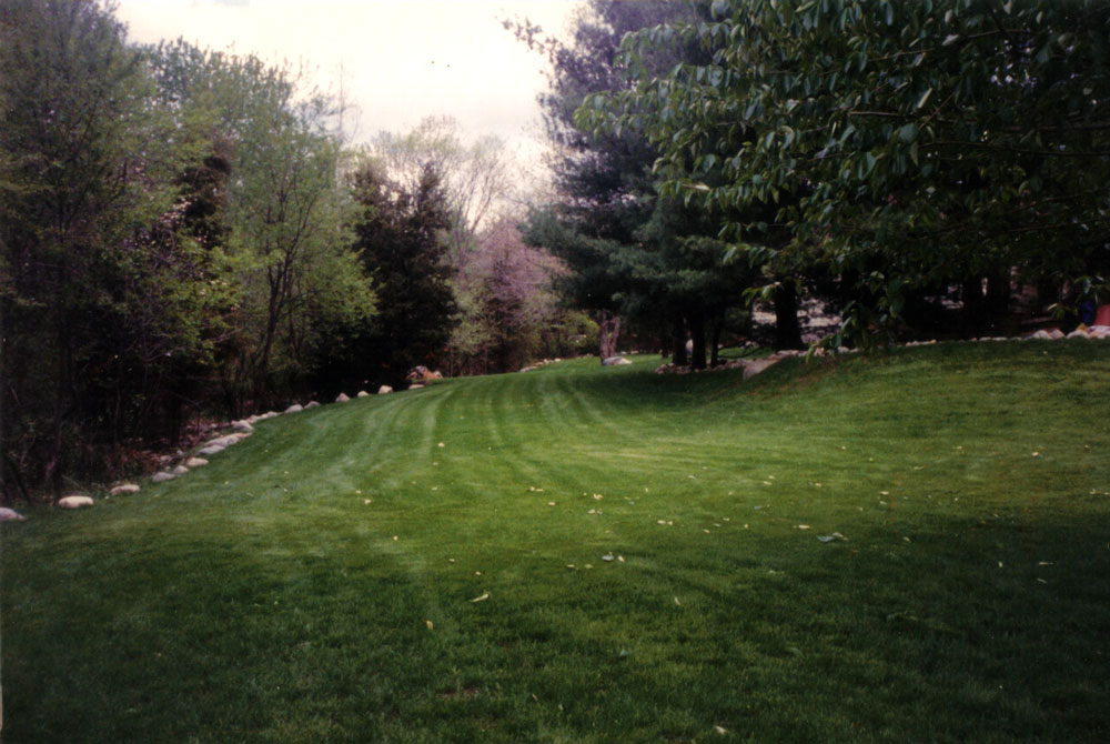 new-lawn-seeded-8-weeks